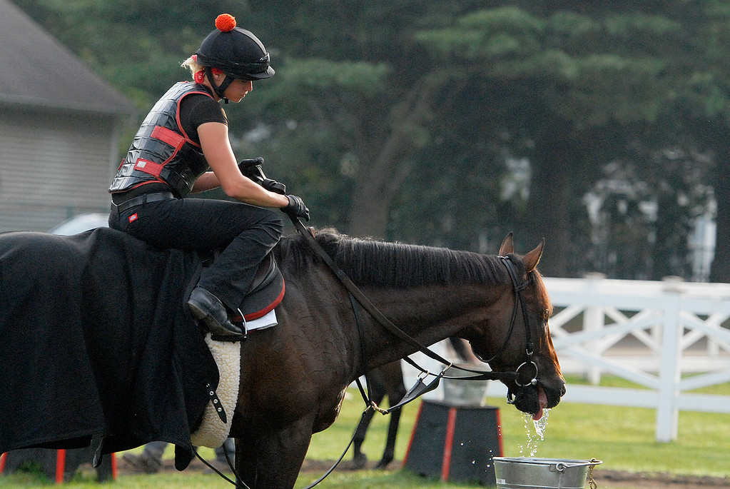 Description of . Exercise rider Jen Patterson sits atop Kentucky Derby winner Orb Aug 19, 2013 after his final major work on the Oklahoma Training Center track in Saratoga Springs, N.Y. Orb will compete in Saturday's Travers Stakes at the Saratoga Race Course. Observing the work was his trainer Shug McGaughey, as Orb takes a break for water.Photo Erica Miller/The Saratogian 8/19/13 Orb7