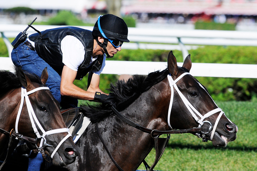 Description of . Johnny Velazquez breezed Verrazano on Saratoga Race Course Sunday morning, trained by Todd Pletcher, set to run in Travers Stakes.Photo Erica Miller/The Saratogian 8/11/13 spt_Verrazano3