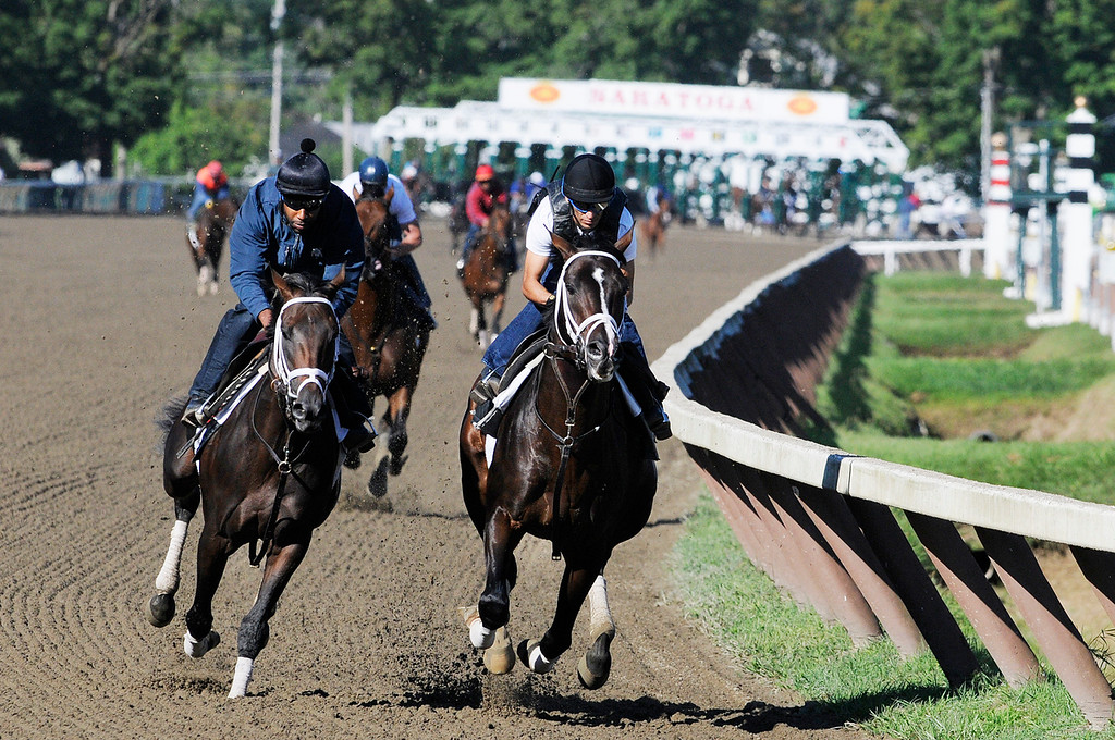 Description of . Johnny Velazquez breezed Verrazano on Saratoga Race Course Sunday morning, trained by Todd Pletcher, set to run in Travers Stakes.Photo Erica Miller/The Saratogian 8/11/13 spt_Verrazano2
