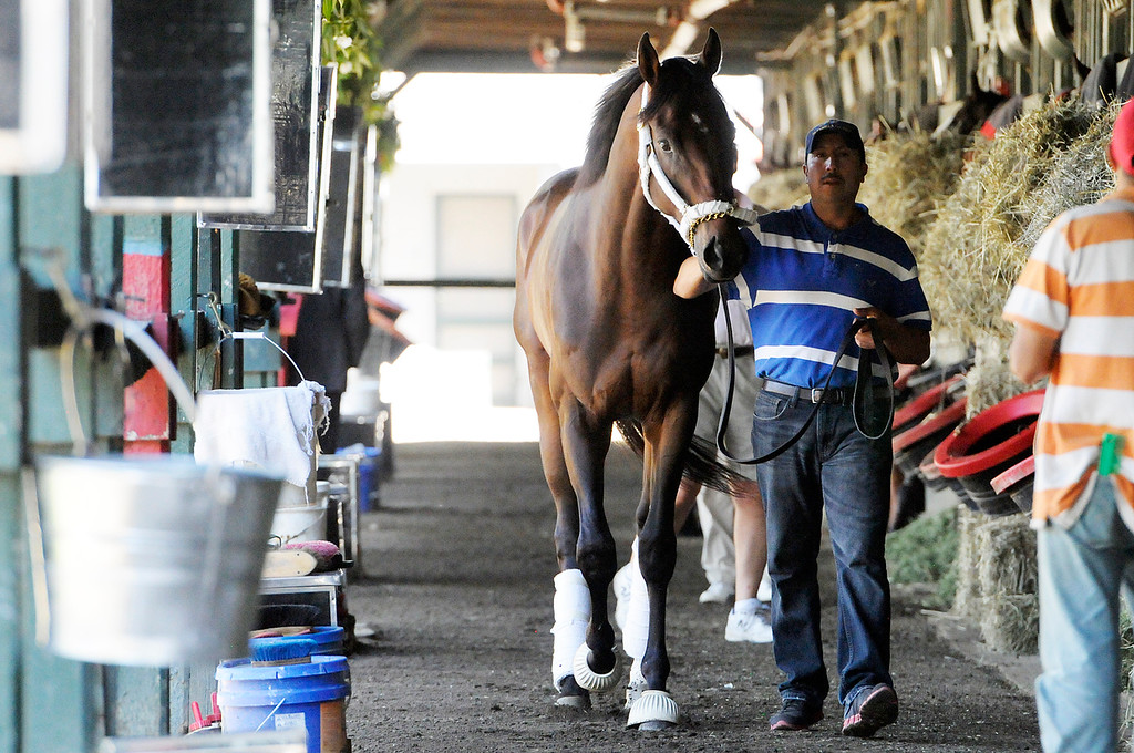 Description of . Trainer Shug McGaughey shipped Kentucky Derby Winner Orb to Saratoga on Sunday morning, as groomsman Crisanto Maldonado walks him in the barn, from Fair Hill Training Center near Elkton, Md. Orb is set to run potentially in the Travers Stakes this summer.Photo Erica Miller/The Saratogian 8/11/13 spt_Orb3_Mon