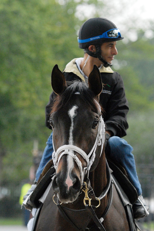 Description of . Johnny Velazquez breezed Verrazano on Sunday morning, trained by Todd Pletcher, set to run in the Travers at the Saratoga Race Course.Photo Erica Miller 8/18/13 Verrazano1