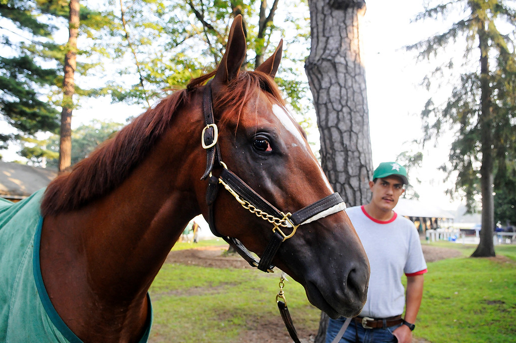 Description of . On the Oklahoma Training Track, Golden Soul is walked outside his barn by groom Albeno Mata. Trainer Dallas Stewart is set to run in the Travers this Saturday at the Saratoga Race Course.Photo Erica Miller/The Saratogian 8/20/13 GoldenSoul3