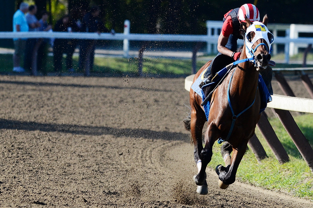 Description of . Jockey Jose Ortiz breezed Moreno, trained by Eric Guillot, on Saturday morning at the Main Track on the Saratoga Race Course, set to run in the Travers. Photo Erica Miller 8/17/13 Moreno1