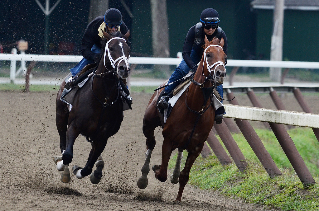 Description of . Johnny Velazquez breezed Verrazano on Sunday morning, trained by Todd Pletcher, set to run in the Travers at the Saratoga Race Course.Photo Erica Miller 8/18/13 Verrazano3
