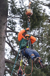 Erica Miller @togianphotog - The Saratogian:   A joint project with the City of Saratoga Springs and Saratoga Springs Preservation Foundation for the Spirit of Life and Spencer Trask Memorial Restoration in Congress Park began this week. Saratoga Springs DPW and members from Tom Mullan Tree and Stump Removal worked on removing decaying trees. DPW Arborist Josh Dulmer was led up by a crane to the top of trees taking them down in pieces.