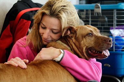 Erica Miller @togianphotog - The Saratogian:    Volunteer Kristina Kline with Momma at the Saratoga Animal Shelter on Thursday morning, April 17th, 2014. Momma was rescued one year ago Saturday from a drug raid in Saratoga Springs on Grand Ave.