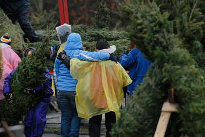 Erica Miller @togianphotog - The Saratogian.   On Wednesday morning, the day before Thanksgiving 11/27/13, over 720 Christmas trees from Vermont arrived at Curtis Lumber for the annual Rotary tree sale. Waiting in the cold rain, bundles up in a shed waited over 60 volunteers. Joining together with Ballston Spa Rotary Club were Saratoga Bridges, Boy scouts from Troop 1, 2 and 246, Ballston Spa HS Interact Club and teachers, Ballston Spa Lions Club, Ballston Spa Football teammates, Twin Bridges and Mechanicville's Rotary Club, family friends and other volunteers.     SAR-l-RotaryTREES14