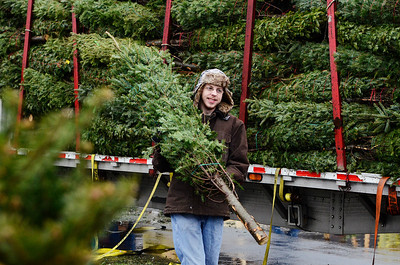 Erica Miller @togianphotog - The Saratogian.   On Wednesday morning, the day before Thanksgiving 11/27/13, over 720 Christmas trees from Vermont arrived at Curtis Lumber for the annual Rotary tree sale. Waiting in the cold rain, bundles up in a shed waited over 60 volunteers. Joining together with Ballston Spa Rotary Club were Saratoga Bridges, Boy scouts from Troop 1, 2 and 246, Ballston Spa HS Interact Club and teachers, Ballston Spa Lions Club, Ballston Spa Football teammates, Twin Bridges and Mechanicville's Rotary Club, family friends and other volunteers.     SAR-l-RotaryTREES1