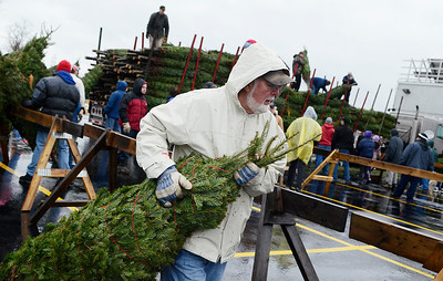 Erica Miller @togianphotog - The Saratogian.   On Wednesday morning, the day before Thanksgiving 11/27/13, over 720 Christmas trees from Vermont arrived at Curtis Lumber for the annual Rotary tree sale. Waiting in the cold rain, bundles up in a shed waited over 60 volunteers. Joining together with Ballston Spa Rotary Club were Saratoga Bridges, Boy scouts from Troop 1, 2 and 246, Ballston Spa HS Interact Club and teachers, Ballston Spa Lions Club, Ballston Spa Football teammates, Twin Bridges and Mechanicville's Rotary Club, family friends and other volunteers.     SAR-l-RotaryTREES2