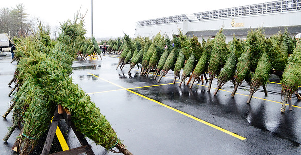Erica Miller @togianphotog - The Saratogian.   On Wednesday morning, the day before Thanksgiving 11/27/13, over 720 Christmas trees from Vermont arrived at Curtis Lumber for the annual Rotary tree sale. Waiting in the cold rain, bundles up in a shed waited over 60 volunteers. Joining together with Ballston Spa Rotary Club were Saratoga Bridges, Boy scouts from Troop 1, 2 and 246, Ballston Spa HS Interact Club and teachers, Ballston Spa Lions Club, Ballston Spa Football teammates, Twin Bridges and Mechanicville's Rotary Club, family friends and other volunteers.     SAR-l-RotaryTREES6