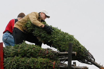 Erica Miller @togianphotog - The Saratogian.   On Wednesday morning, the day before Thanksgiving 11/27/13, over 720 Christmas trees from Vermont arrived at Curtis Lumber for the annual Rotary tree sale. Waiting in the cold rain, bundles up in a shed waited over 60 volunteers. Joining together with Ballston Spa Rotary Club were Saratoga Bridges, Boy scouts from Troop 1, 2 and 246, Ballston Spa HS Interact Club and teachers, Ballston Spa Lions Club, Ballston Spa Football teammates, Twin Bridges and Mechanicville's Rotary Club, family friends and other volunteers.     SAR-l-RotaryTREES8