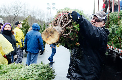 Erica Miller @togianphotog - The Saratogian.   On Wednesday morning, the day before Thanksgiving 11/27/13, over 720 Christmas trees from Vermont arrived at Curtis Lumber for the annual Rotary tree sale. Waiting in the cold rain, bundles up in a shed waited over 60 volunteers. Joining together with Ballston Spa Rotary Club were Saratoga Bridges, Boy scouts from Troop 1, 2 and 246, Ballston Spa HS Interact Club and teachers, Ballston Spa Lions Club, Ballston Spa Football teammates, Twin Bridges and Mechanicville's Rotary Club, family friends and other volunteers.     SAR-l-RotaryTREES4
