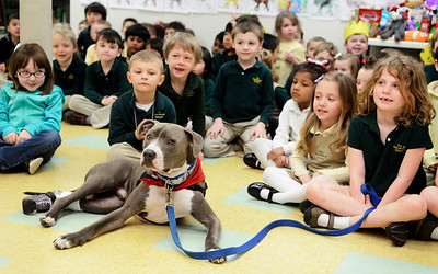 Erica Miller @togianphotog - The Saratogian:  Hudson, and owner Rich Nash, visited Sara Marie School in Clifton Park on Thursday, April 10th, 2014, morning to see a full room of students. Hudson who has a prosthetic paw after his back left paw had to be amputated after being left on the railroad tracks. Students learned the importance of the therapy dog, also collected donations from two weeks for the human society.