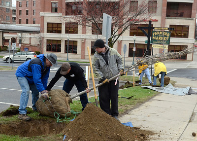 Ed Burke - The Saratogian 04/26/14 Volunteers from Keller Williams Real Estate plant trees along Lake Ave. as part of Saturday's Tree Toga event to enhance the city's urban forest.