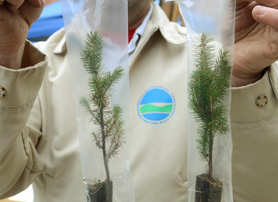 Ed Burke - The Saratogian 04/26/14 Saratoga Tree Nursery manager David Lee holds up seedlings of white spruce, left, and red sruce trees he was offering to visitors Saturday at the Tree Toga event on Henry St. Both species are native to New York.