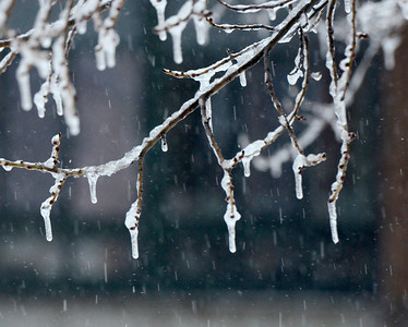 Ed Burke - The Saratogian 03/12/14 Icicles hang from a tree near Saratoga Springs Public Library during Wednesday's storm.