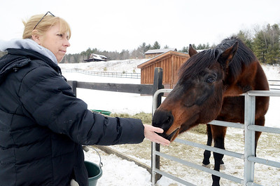 Erica Miller @togianphotog - The Saratogian,    At Cabin Creek on Friday afternoon, Jan. 31 2014, Joann Pepper feeds Behrens carrots and mints. Cabin Creek is a part of the Old Friends organization for saving retired race horses,