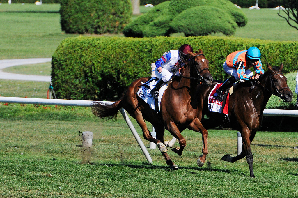 . With a short lead, Laughing ridden by Jose Lezcano won The 25th Running of The Ketel One Ballston Spa Stakes at the Saratoga Race Course on the inner turf Saturday.Photo Erica Miller/The Saratogian 8/24/13 BallstonSpaEM1