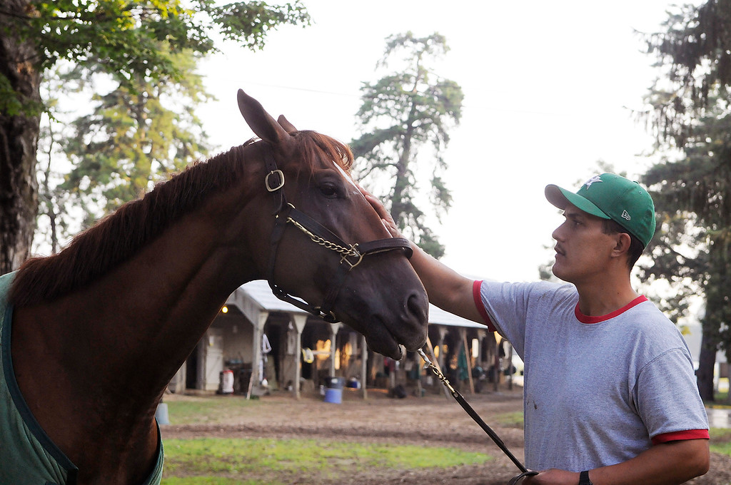 . On the Oklahoma Training Track, Golden Soul is walked outside his barn by groom Albeno Mata. Trainer Dallas Stewart is set to run in the Travers this Saturday at the Saratoga Race Course.Photo Erica Miller/The Saratogian 8/20/13 GoldenSoul2